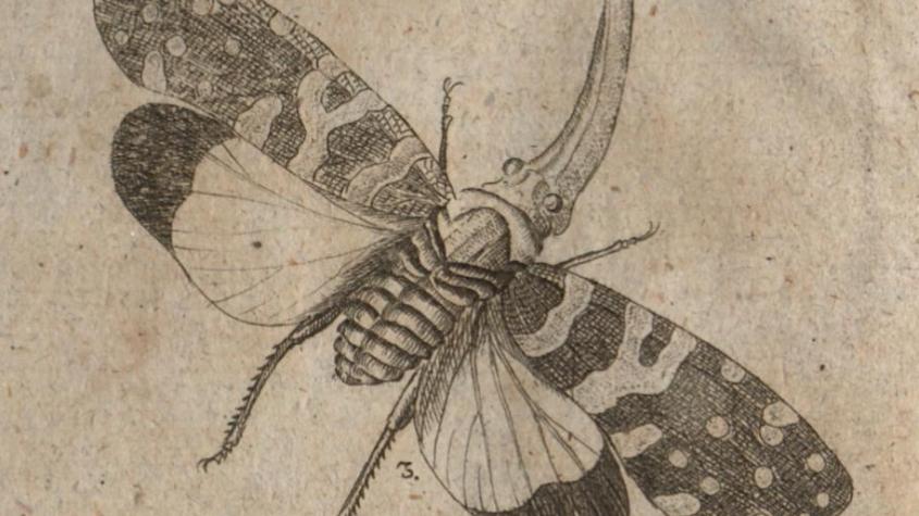 Fulgora candelaria. In: Scheureck, Friedrich August: Von den Käfern. Altona; Leipzig : Kaven, 1796. Frontispiz. SBB-PK: B XVIII 3b, 390-1 R KJAR