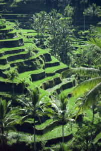 Rice terraces, Bali, Indonesia, Southeast Asia, Asia - Quelle: Britannica ImageQuest © Robert Harding Productions / Robert Harding World Imagery / Universal Images Group Rights Managed / For Education Use Only
