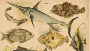 Kostenlos datieren Fisch im Meer