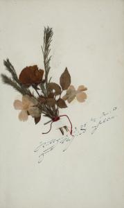 Berliner Blumentagebuch der Clara Schumann (Blumenblatt 8) || Abbildung: Digitale Bibliothek der SBB-PK