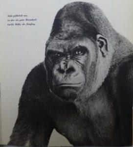"""Abbildung aus dem Buch: Heck - Tiere, wie sie wirklich sind """"Sieht gefährlich aus, ist aber ein guter Riesenkerl: Gorilla Bobby als Jüngling"""" (c) SBB"""