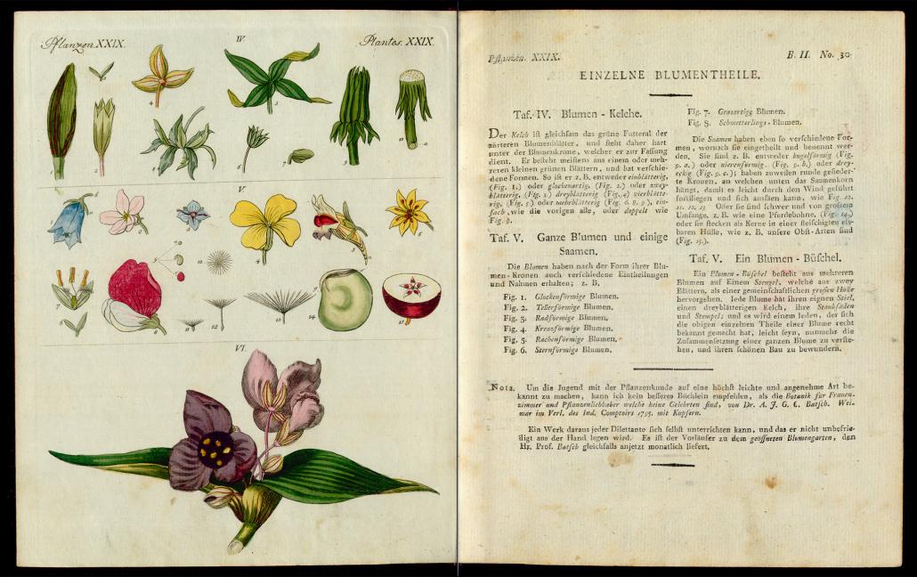 Friedrich Justin Bertuch, Bilderbuch für Kinder, B XXIII, 8-2 R, S. 130 und 131
