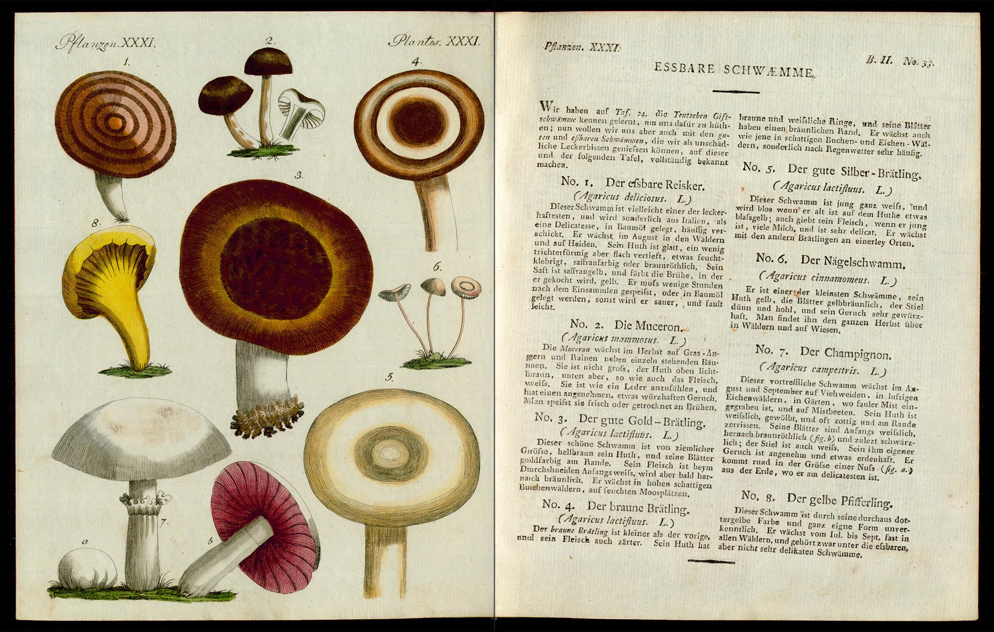 Friedrich Justin Bertuch, Bilderbuch für Kinder, B XXIII, 8-2 R, S. 142 und 143