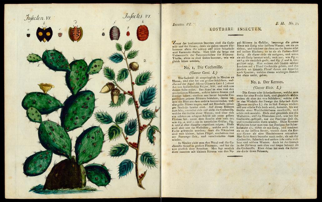 Friedrich Justin Bertuch, Bilderbuch für Kinder, B XXIII, 8-2 R, S. 134 und 135