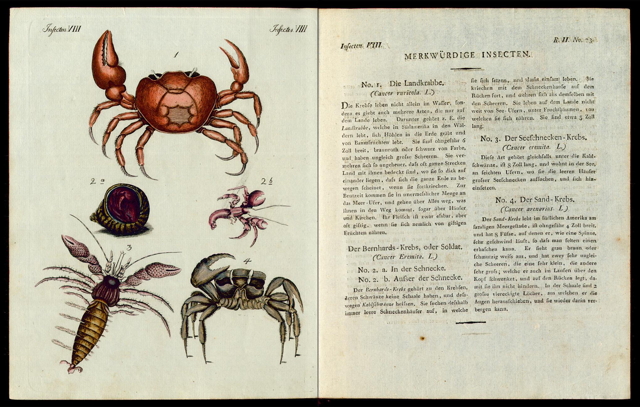 Friedrich Justin Bertuch, Bilderbuch für Kinder, B XXIII, 8-2 R, S. 302 und 303