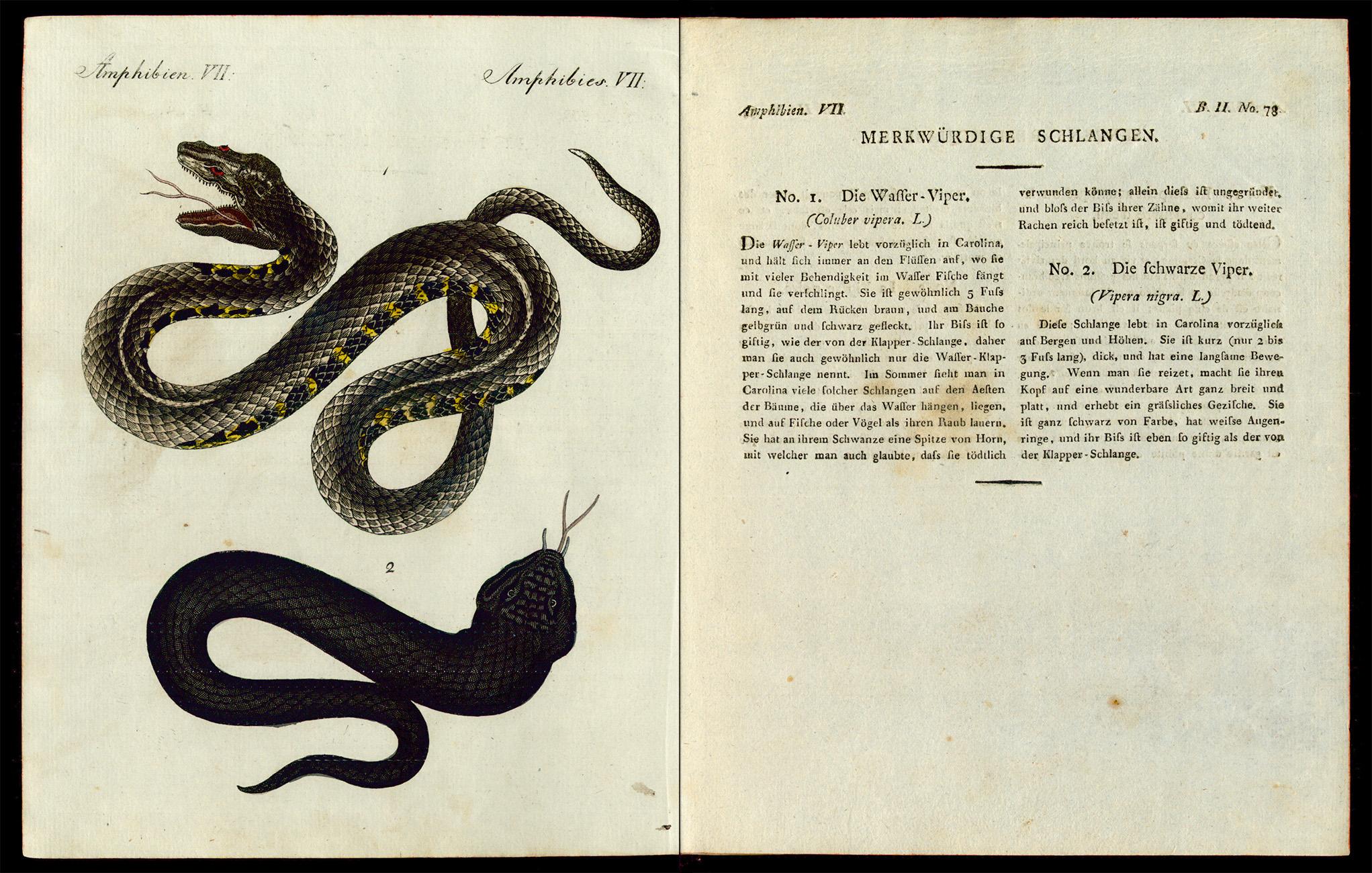 Friedrich Justin Bertuch, Bilderbuch für Kinder, B XXIII, 8-2 R, S. 322 und 323