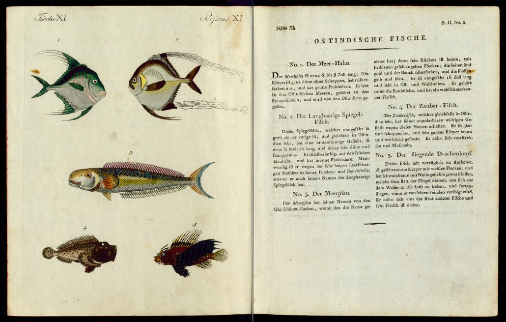 Friedrich Justin Bertuch, Bilderbuch für Kinder, B XXIII, 8-2 R, S. 32 und 33