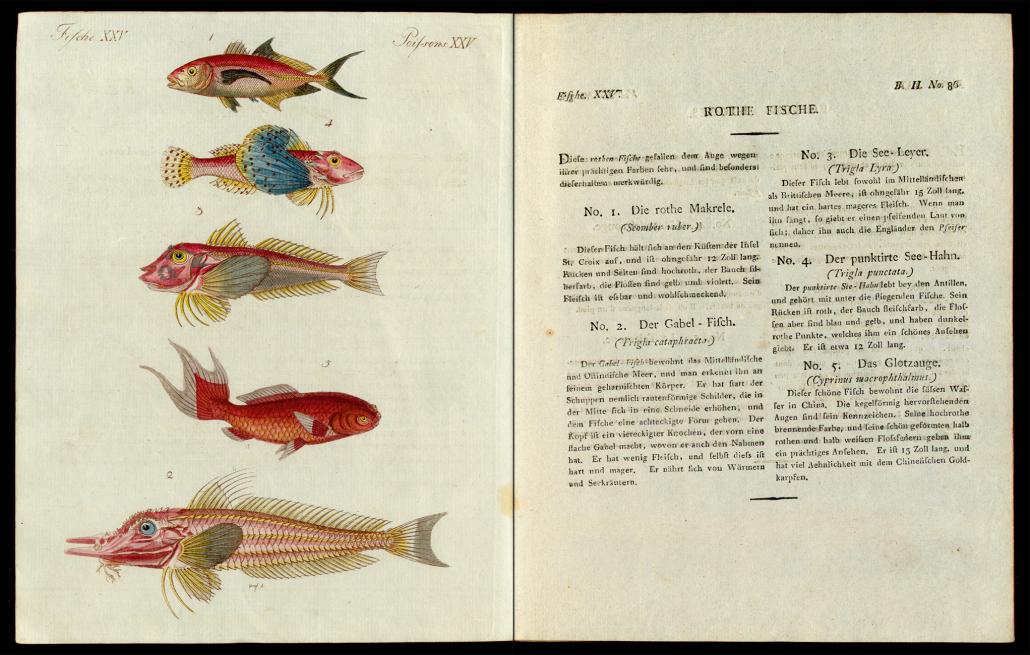 Friedrich Justin Bertuch, Bilderbuch für Kinder, B XXIII, 8-2 R, S. 354 und 355