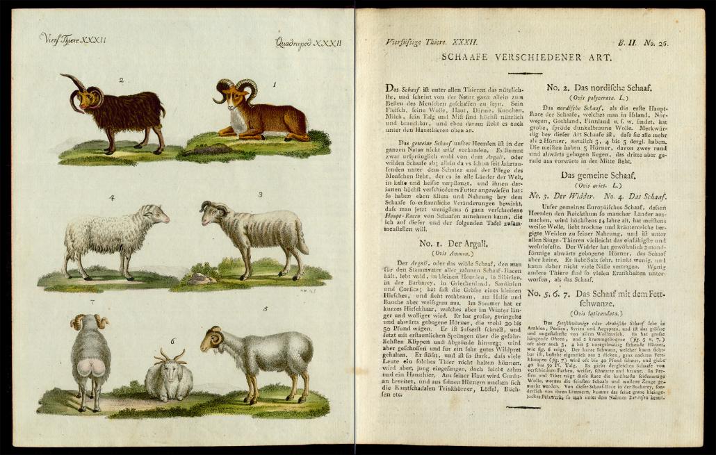 Friedrich Justin Bertuch, Bilderbuch für Kinder, B XXIII, 8-2 R, S. 114 und 115