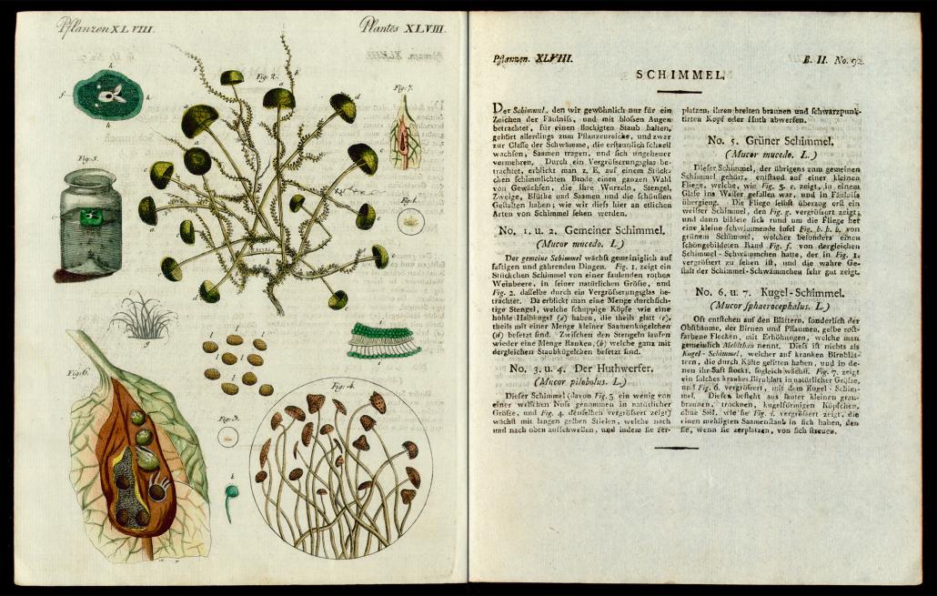 Friedrich Justin Bertuch, Bilderbuch für Kinder, B XXIII, 8-2 R, S. 378 und 379