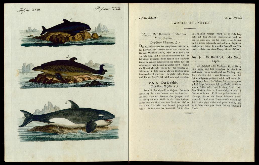 Friedrich Justin Bertuch, Bilderbuch für Kinder, B XXIII, 8-2 R, S. 254 und 255