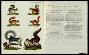 Friedrich Justin Bertuch, Bilderbuch für Kinder, 1795. SBB, B XXIII, 8-2 R. Art. 278-279.