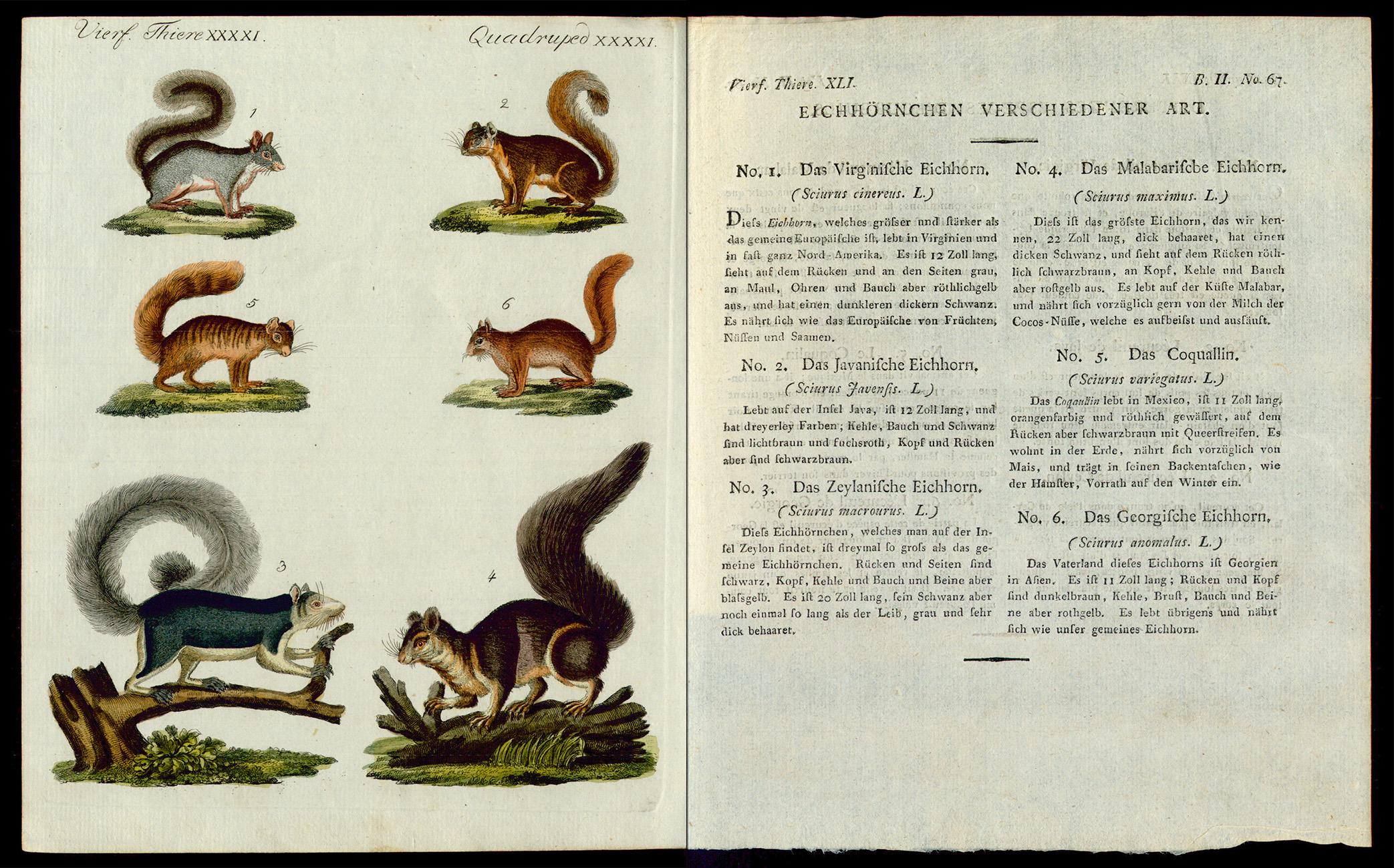Friedrich Justin Bertuch, Bilderbuch für Kinder, B XXIII, 8-2 R, S. 278 und 279