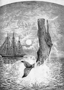 MELVILLE: MOBY DICK. Pehe Nu-E. The only known picture of 'Moby Dick' drawn during Melville's lifetime. Wood engraving, late 19th century. Quelle: Britannica ImageQuest. Copyright: The Granger Collection/Universal Images Group