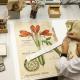 Restaurierung botanischer Tafeln. Foto: Staatsbibliothek zu Berlin-PK - CC BY-NC-SA 4.0