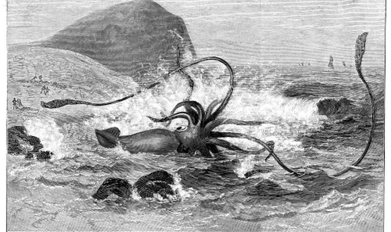 A giant squid washed ashore on the Newfoundland coast in 1877: wood engraving from a contemporary American newspaper. Quelle: Britannica ImageQuest, The Granger Collection, Universal Images Group