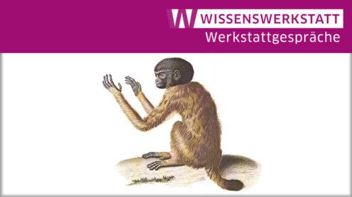 Simia melanocephala, in: Alexander von Humboldt, Recueil d'observations de zoologie et d'anatomie comparée, Paris 1812, Tafel 29. Aus: Das graphische Gesamtwerk, Darmstadt 2015.