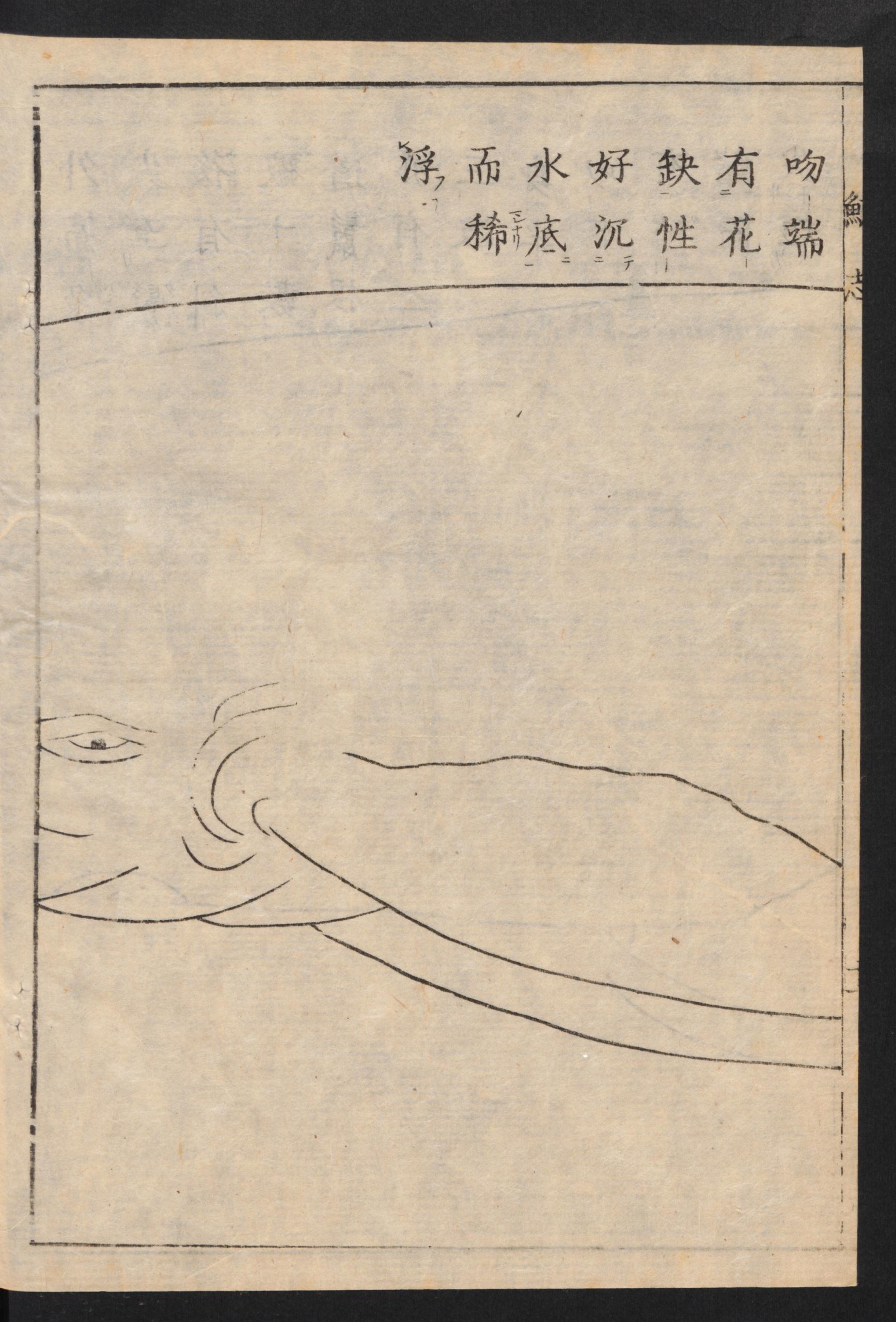 Harumasa Yamase: Geishi
