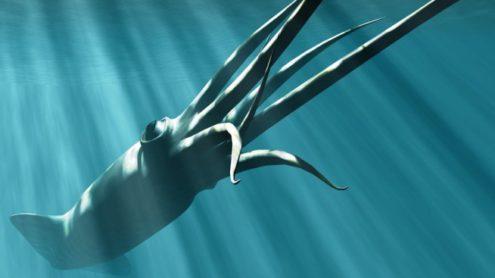 Giant Squid, Quelle: Britannica ImageQuest © Christian Darkin, Science Photo Library